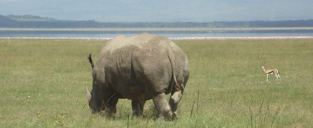 A new dawn for wildlife conservation in Kenya: opportunities and shortcomings.
